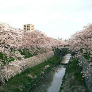 桜で有名な山崎川沿いにある会場です。
